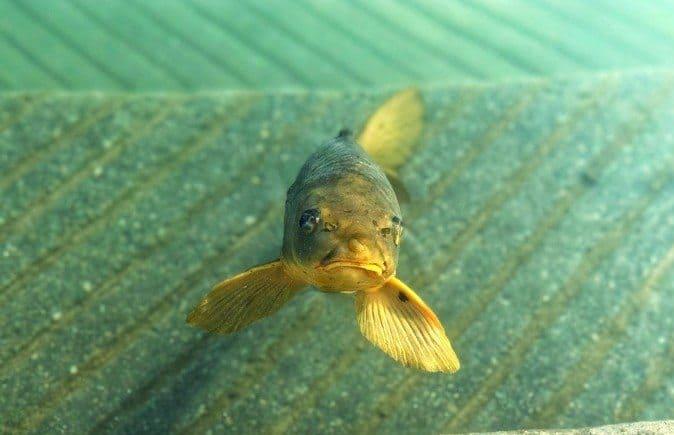 Amazon business isn't the prettiest fish